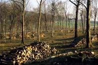Abattage du bois